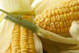 В Белоруссии начался сев кукурузы