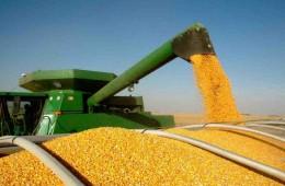 Уборка кукурузы в целом в Белоруссии близится к завершению