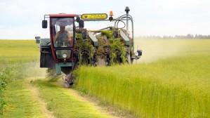 Четверть льна в Белоруссии уже убрано