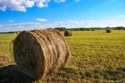 Заготовка сена в Белоруссии перевалила экватор