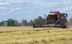 Почти треть пивоваренного ячменя в Белоруссии уже убрана