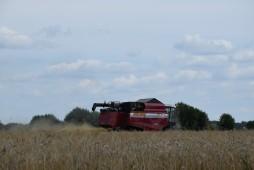 Более трети зерновых культур в Белоруссии уже убрано
