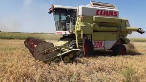 Уборка проса в Белоруссии близится к экватору