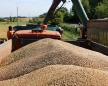 Намолот зерна в Белоруссии перевалил отметку в 8 миллионов тонн