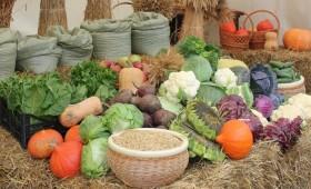 Более 70% овощей в Белоруссии уже убрано