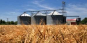 Белоруссия подвела итог экспорту продукции растениеводства за 9 месяцев